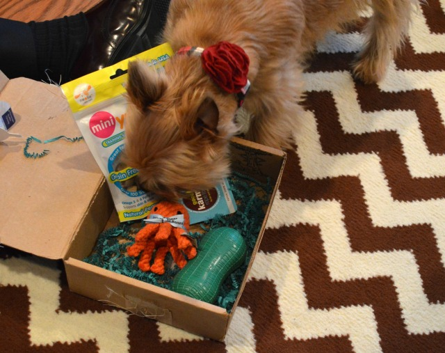 BarkBox2
