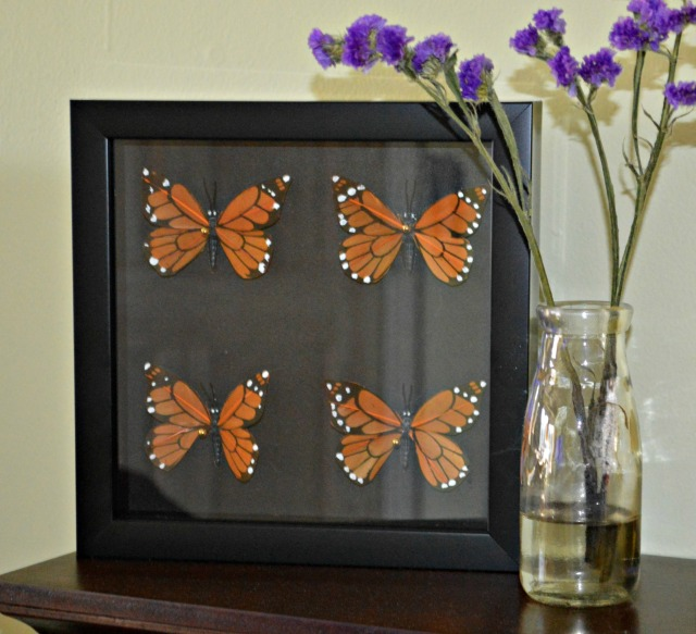 ButterflyDisplay1